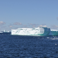 Massive Icebergs on the Loose in Goose Cove, NL - Draw Crowds