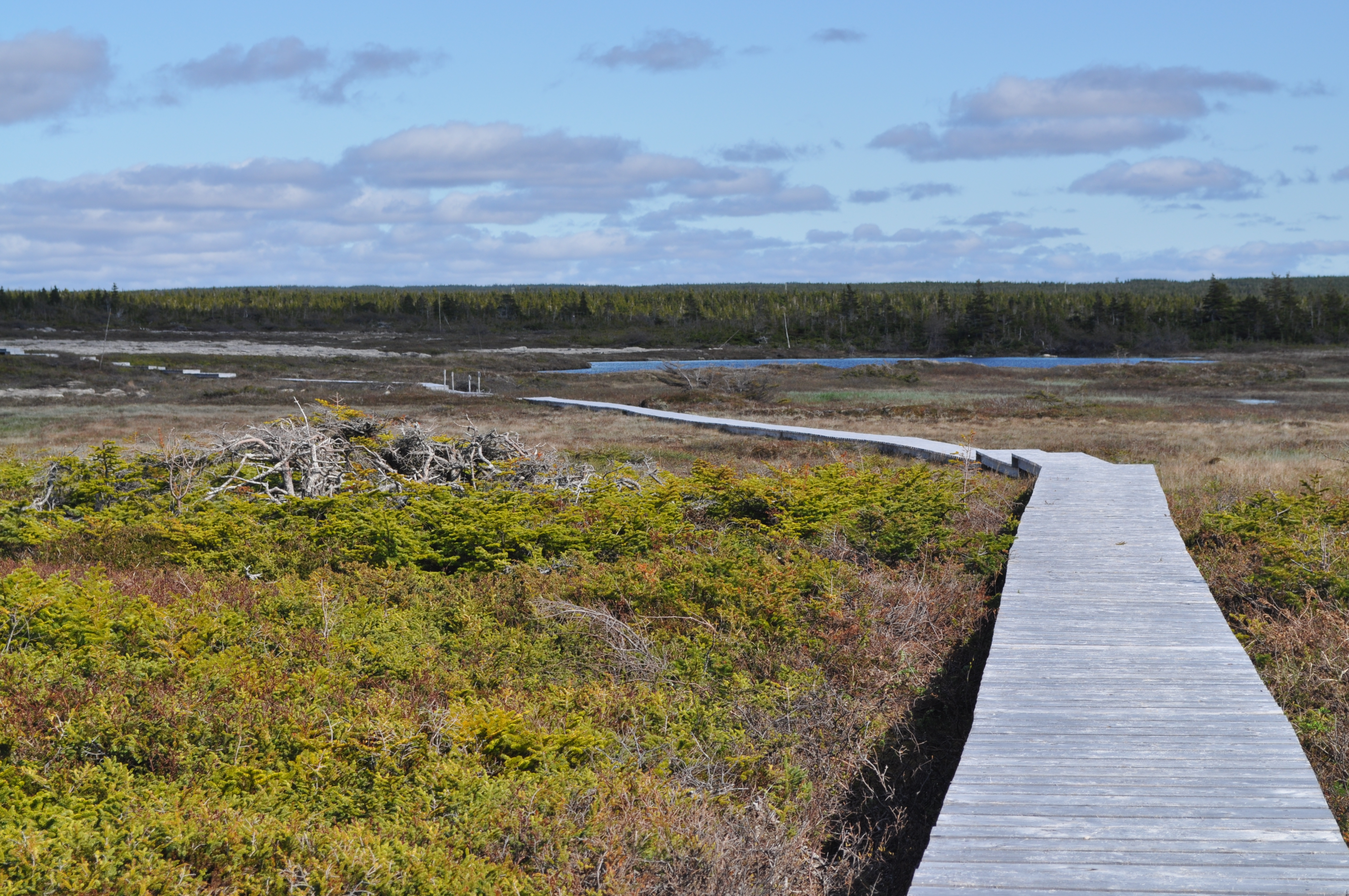 White Rocks Walking Trail Flower S Cove Nl Live Rural