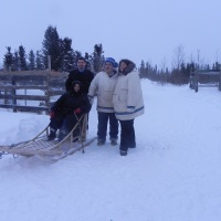 A Team of Labrador Huskies in Happy Valley - Goose Bay