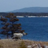 Heritage, Wildlife & Coastal Scenery at New Ferolle, Shoal Cove West & Reef's Harbour