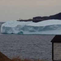 Icebergs anchor in St. Anthony Bight, St. Carol's and Great Brehat!